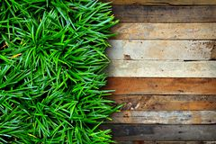 Fresh green grass and Wood. Background Stock Photos