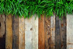 Fresh green grass and Wood Stock Image