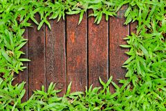 Fresh green grass on Wood background Royalty Free Stock Photo
