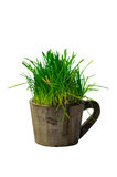 Fresh green grass in wooden cup Royalty Free Stock Photos