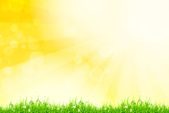 Fresh green grass with yellow bokeh and sunlight. Beauty natural Stock Photo