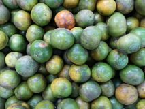 A fresh green group of deliciously sweet, North Shokun oranges, naturally scarred and colored, grown in Thailand. Outward appearances can be deceiving, with royalty free stock photos