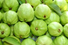 Fresh and green Guava fruit Stock Photos