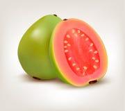 Fresh green Guava fruit. Stock Photos