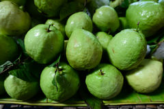 Fresh and green Guava fruit Royalty Free Stock Images