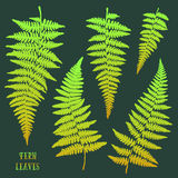 Fresh green hand drawn fern leaves isolated on dark background. Stock Photos