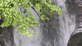 Branch in front of waterfall stock video footage