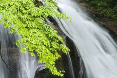 Branch in front of waterfall. Fresh green hardwood leaves on branch in front of waterfall Stock Image