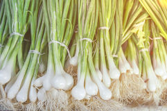 Fresh green healthy bio leek on farmer agricultural market on morning sunny day. Close Royalty Free Stock Photography