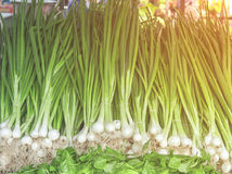 Fresh green healthy bio leek on farmer agricultural market on morning sunny day. Fresh green healthy bio leek on farmer agricultural market on sunny day close Royalty Free Stock Images