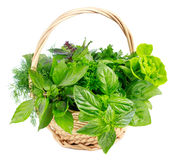 Fresh green herb. Stock Images