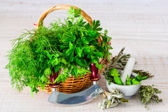 Fresh and Green Herbs Stock Images