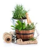 Fresh green herbs with garden tools Royalty Free Stock Photos