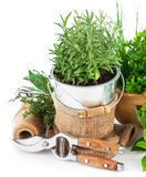 Fresh green herbs with garden tools Royalty Free Stock Photos