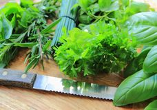 Fresh green herbs Royalty Free Stock Images