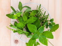 Fresh green herbs harvest from garden in the basket Royalty Free Stock Photo