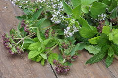 Fresh green herbs Royalty Free Stock Photo