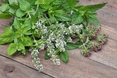 Fresh green herbs Royalty Free Stock Photography