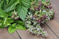 Fresh green herbs Royalty Free Stock Image