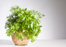 Fresh green herbs in a pot over white stock images