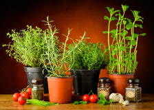 Fresh green herbs Royalty Free Stock Photography
