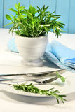Fresh green herbs on a table Royalty Free Stock Photos