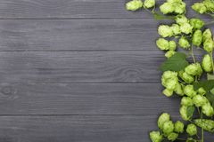 Fresh green hop cones on black wooden background. Ingredient for beer production. Top view with copy space for your text Royalty Free Stock Photography