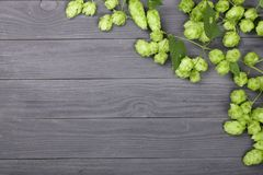 Fresh green hop cones on black wooden background. Ingredient for beer production. Top view with copy space for your text Royalty Free Stock Images