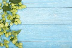 Fresh green hop cones on blue wooden background. Ingredient for beer production. Top view with copy space for your text Royalty Free Stock Photo
