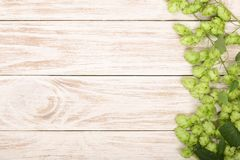 Fresh green hop cones on white wooden background. Ingredient for beer production. Top view with copy space for your text.  royalty free stock photography