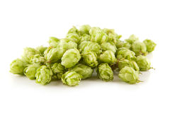 Fresh green hops Royalty Free Stock Photography
