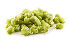 Fresh green hops Royalty Free Stock Photos