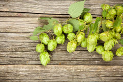 Fresh green hops Royalty Free Stock Images