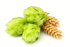 Fresh green hops, ears of barley and wheat grain isolated. Stock Photo