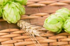 Fresh green hops Stock Photos
