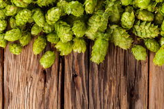 Fresh green hops on wooden desk Royalty Free Stock Photos
