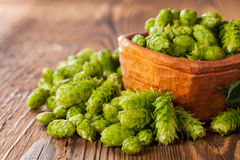 Fresh green hops on wooden desk Royalty Free Stock Photography