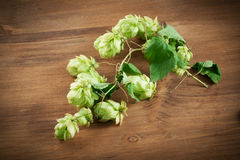 Fresh green hops on a wooden tableFresh green hops on a wooden. Fresh green hops on a wooden table Royalty Free Stock Photography