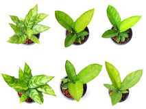 Fresh of green house plants top view isolated on white backgroun. D Royalty Free Stock Image