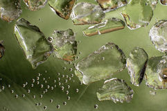 Fresh green. ice cubes Stock Photography