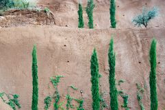 Fresh green junipers, vines and other trees against red clay bac. Kground in Port Adriano, Mallorca, Spain Royalty Free Stock Photo