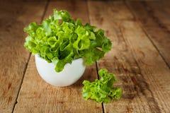 Fresh green kale in ceramic bowl. Selective focus. Royalty Free Stock Image