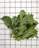 Fresh green kale Royalty Free Stock Photo