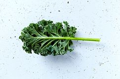 Fresh green kale leaf Stock Photography