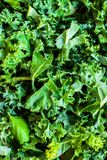 Fresh green kale salad leaves  background. Greens  texture close Stock Photography
