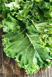 Fresh Green Kale Stock Image
