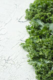 Fresh green kale. On white background with space for text Stock Photography