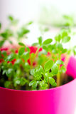Fresh green kitchen herbs in colorful pots Stock Images