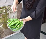 Fresh green lady finger or okra vegetable in bowl,  Human hands holding the bowl Royalty Free Stock Image
