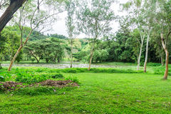 Fresh green lawn with pond in nature park Stock Images